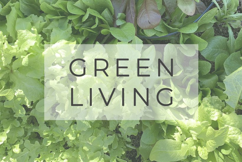 green living text over background image of lettuce garden